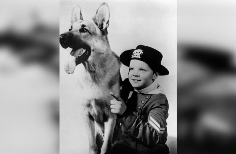 Lee Aaker Dies: 'Adventures Of Rin Tin Tin' Child Star Was 77