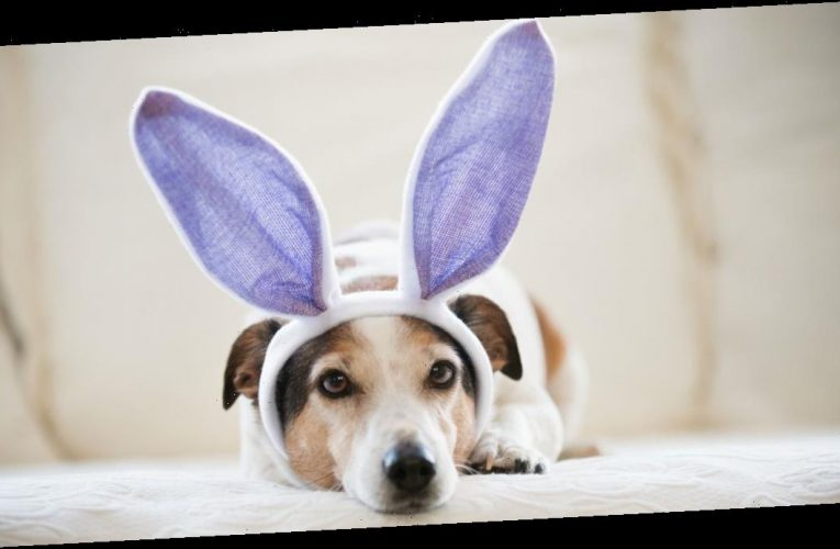 Pets at Home sells Easter eggs for dogs so furry friends don't miss out on fun