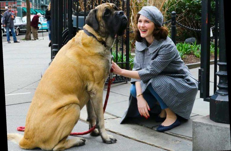 Rachel Brosnahan Makes a Furry Friend in N.Y.C., Plus Jon Hamm, Thomas Brodie-Sangster and More