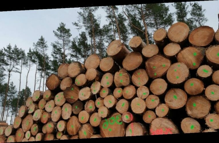 Sustainable crop, timber production can reduce extinction of species by 40%: Study