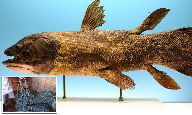 420-million-year-old fish that predates dinosaurs found alive
