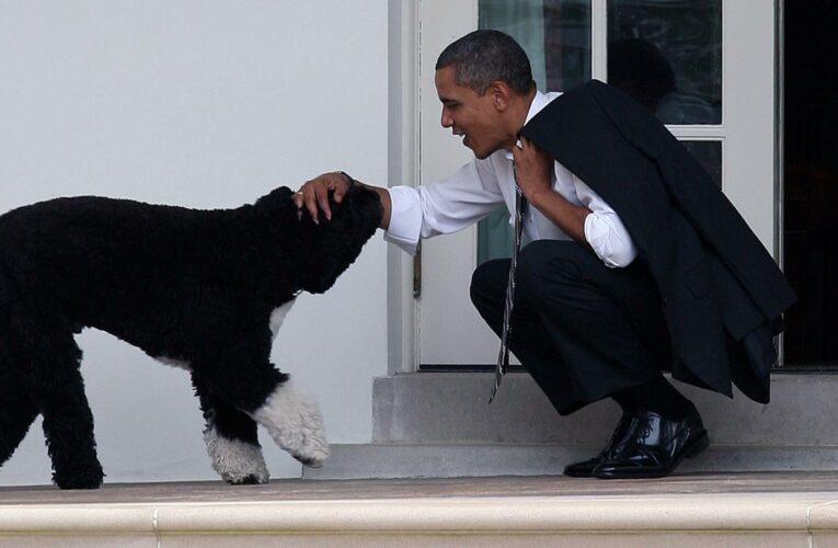 Barack Obama Opens Up About The Death Of His Beloved Dog Bo