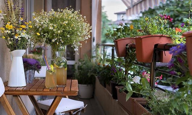Chelsea Flower Show will recognise veranda displays for the first time