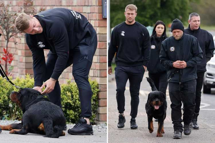 Dan Osborne gets HUGE Rottweiler guard dog to protect his family after fearing they'd be targeted in raid
