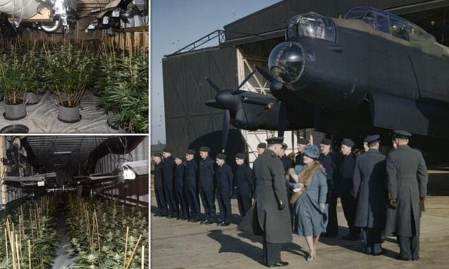 Drugs gang hides £1.4m cannabis farm on old World War Two airbase