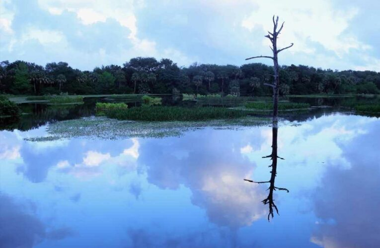 First-ever 'rights of nature' lawsuit filed in Florida to fight development