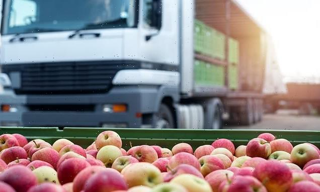 Food prices could rise due to shortage of lorry drivers