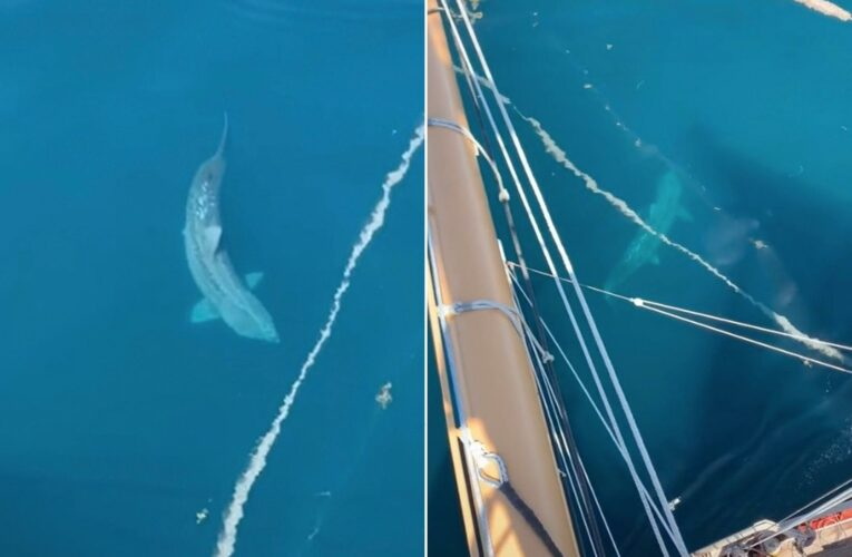 Giant shark in TikTok sparks 'megalodon' theory after giving tourists a scare