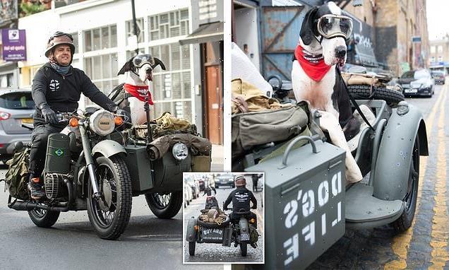 Great Dane loves to ride in owner's motorbike sidecar like Gromit