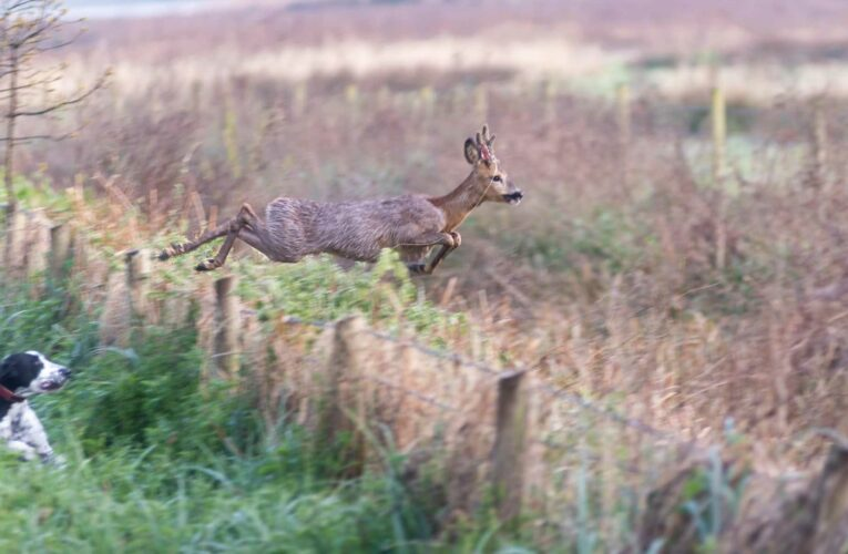 Horror moment deer desperately runs from out-of-control dog before being mauled in Titchfield Canal