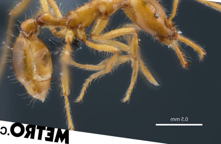 Newly-discovered ant species named for gender diversity