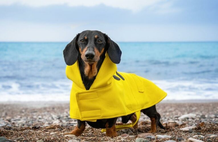 Primark is selling £7 Winnie the Pooh raincoats for dogs and they're so adorable