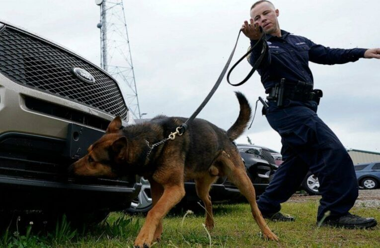 Since the nose doesn't know pot is now legal, K-9s retire