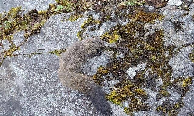 'Giant' flying squirrels discovered in remote part of the Himalayas