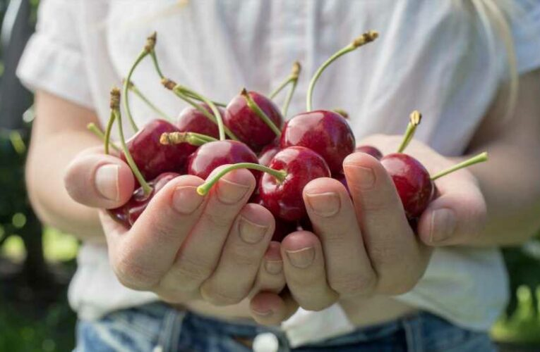 7 Things You Never Knew About Sweet Cherries