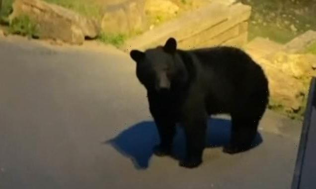 Bear charges towards vacationer when he greets it with a cheery 'hey'