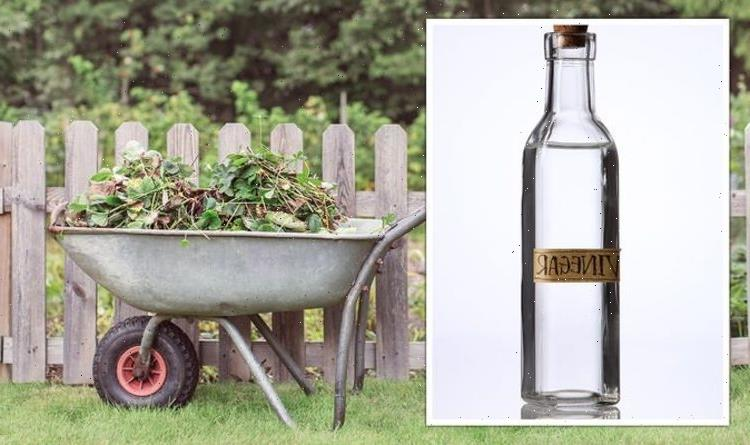 Gardening expert shares 'DIY' hack for removing weeds but warns 'it can kill most plants'