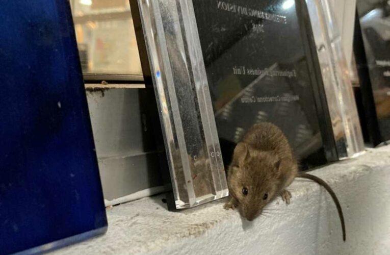 Massive mice infestation forces Australian prison to evacuate