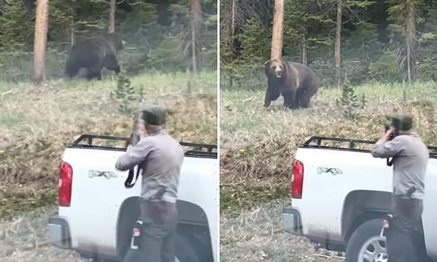 Moment a Yellowstone Park ranger fires at grizzly bear charging at him