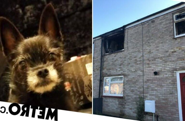 Tiny dog with a big bark saves family from fire