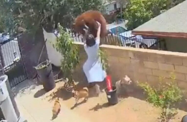 Watch: Woman fights off bear to protect her dogs