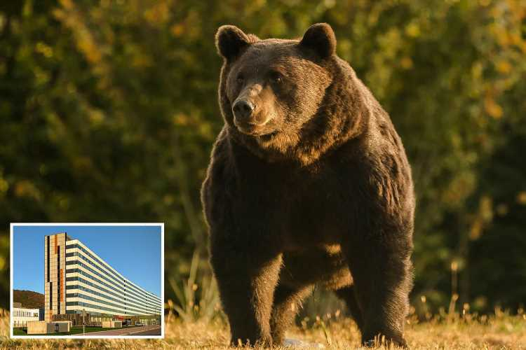 Woman mauled by bear in Spain as beast clawed her face & tried to drag her away before hero rescuers fought it off