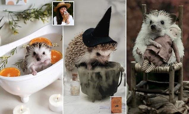 Adorable rescue hedgehog stars in photoshoots with tiny props