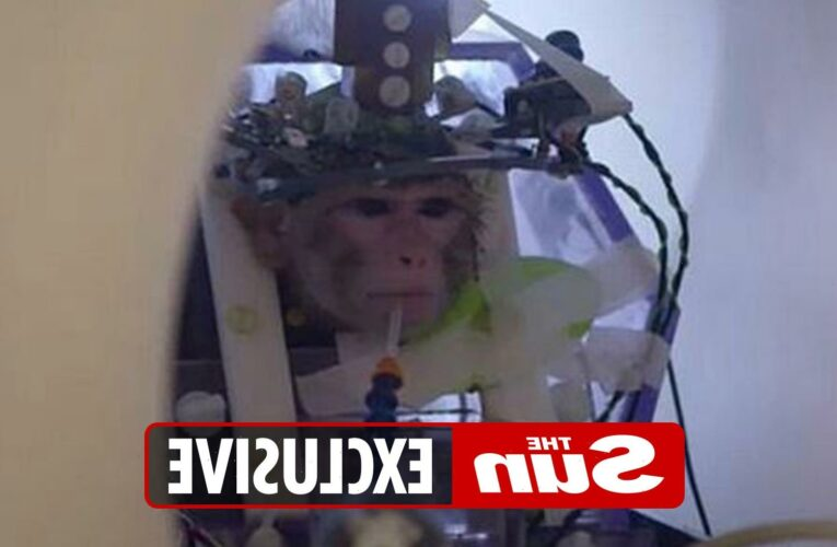 Chilling world of mind control as scientists experiment on monkey brains, tape memories and create 'remote control' mice