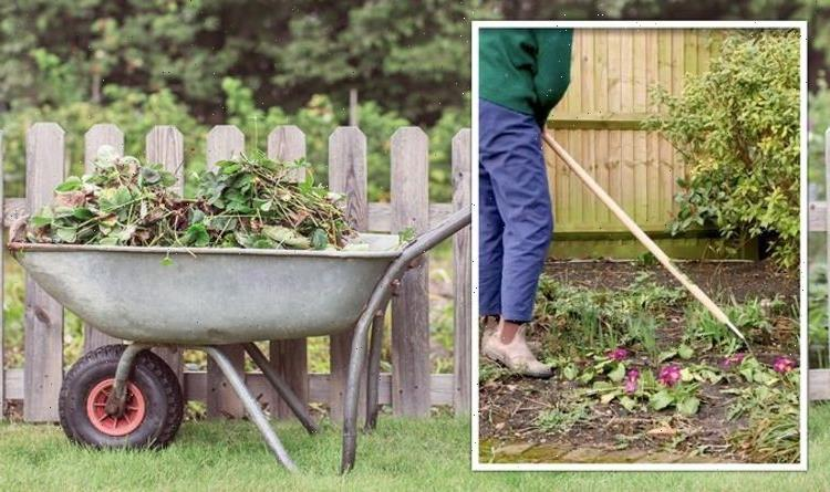 Gardening expert shares 'perfect tool' for removing weeds – 'wither and die in no time!'