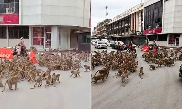 Rival gangs of wild monkeys fight in front of drivers in Thailand