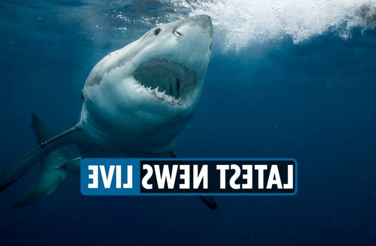 Shark week 2021 schedule revealed – Discovery Channel line-up to feature Brad Paisley and Dr. Pimple Popper