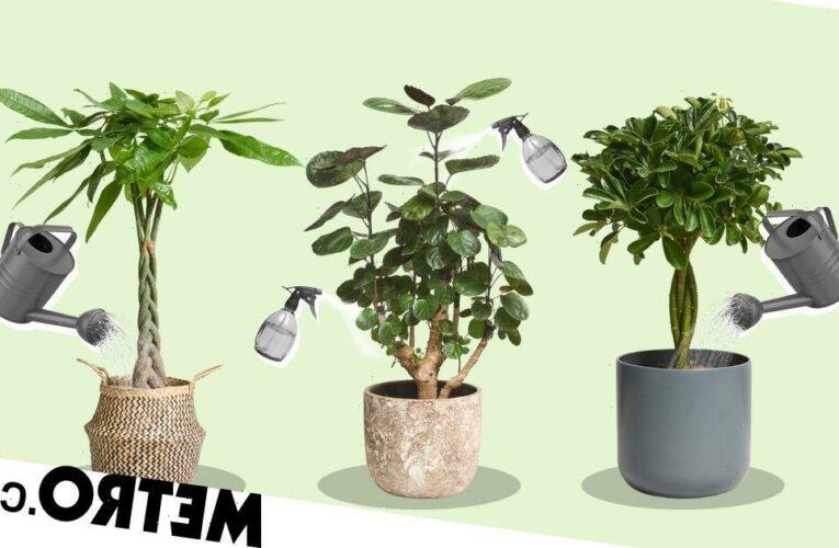 These indoor trees will transform your home into a forest haven