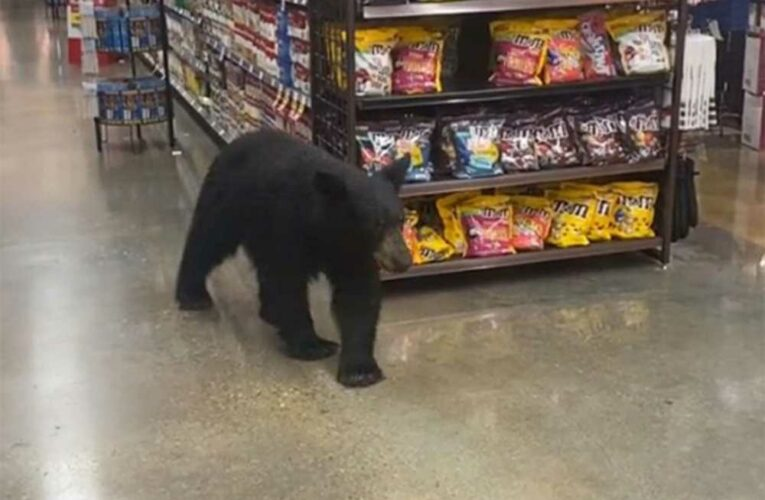 Video shows bear strolling through California grocery store