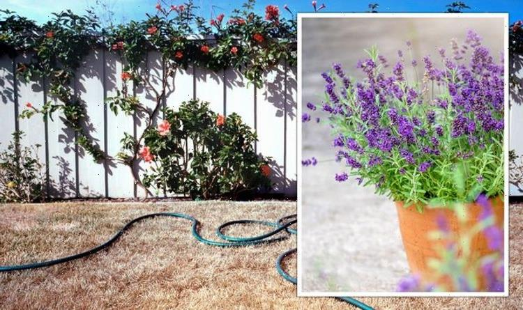 Gardening expert shares best drought-resistant plants for gardeners who forget to water