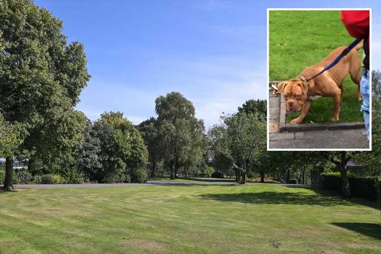 Mum reveals horror as son, 4, 'traumatised' after French Mastiff attacks him in the park while owners 'laugh'