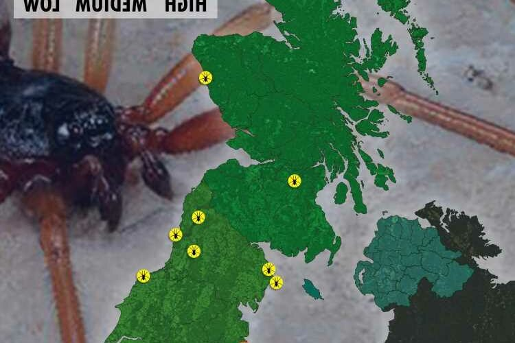 Shoppers horror as Morrisons invaded by flesh eating false widow spider