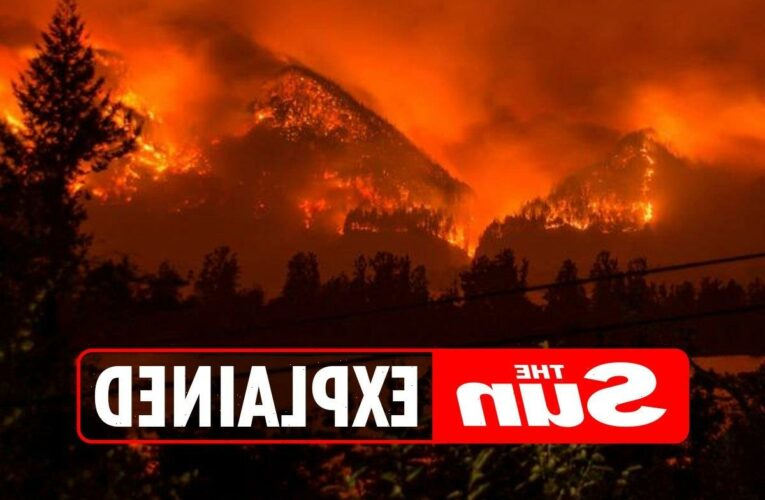 What are wildfires, how do they start, why do they spread so quickly and where's been struck this year?