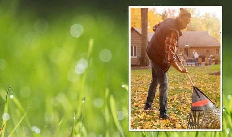 When NOT to scarify your lawn: The FIVE signs it's the wrong time of year