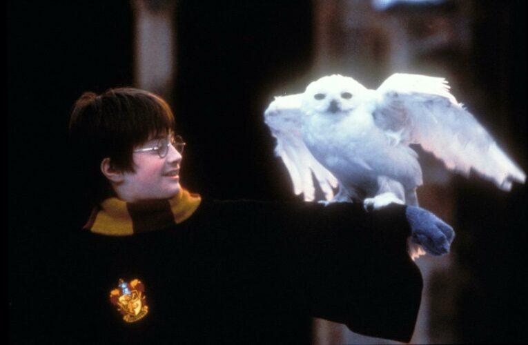 Daniel Radcliffe Denies Breaking 60 Wands on 'Harry Potter' Set: 'It's Not That Many'