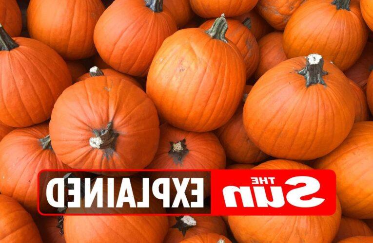 Is pumpkin a fruit?