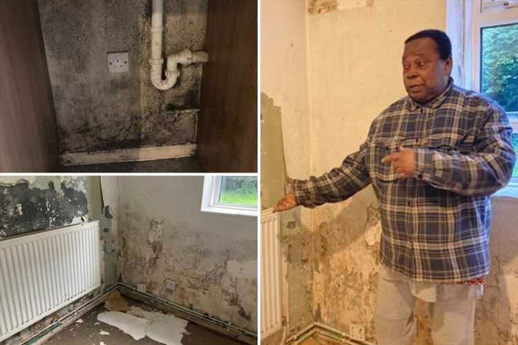 Widower, 81, forced to live in hotel for three months as mould-ridden flat is so damp 'pictures fall off the wall'